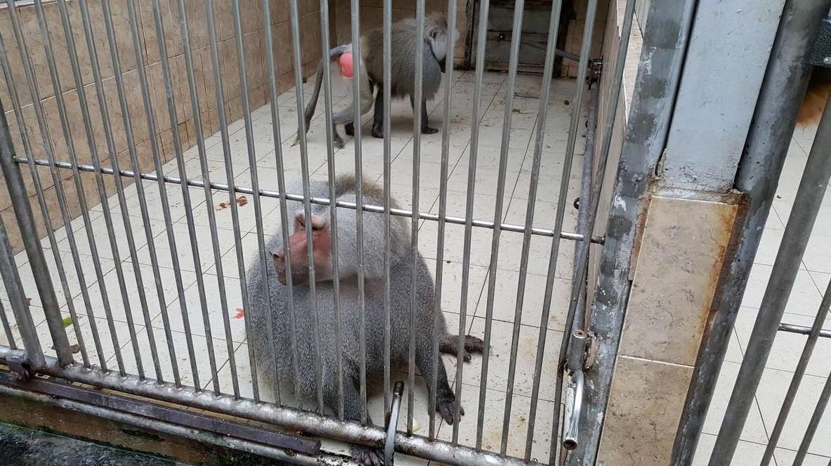 Питомник обезьян в Сухуме