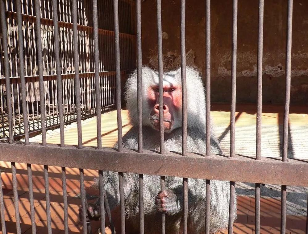 Состояние клеток, где содержатся обезьяны в ужасном состоянии