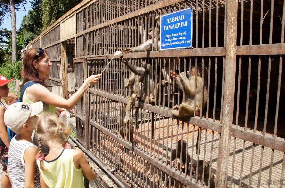 Питомник обезьян в Сухуме - фото и отзывы
